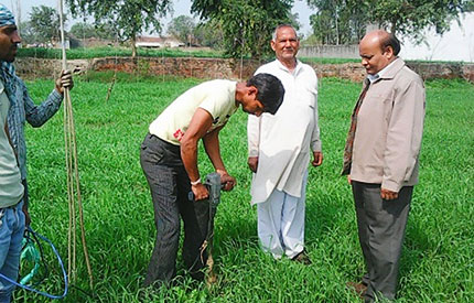 Digging For Poplar Saplings in District Meerut